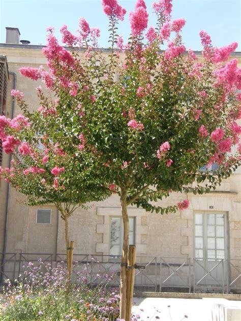 petit arbuste en pot petit arbre en pot 28 images petit arbre et arbuste s installent aussi en terrasse jardin