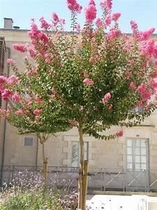 Pot Pour Arbre : petit arbre pour pot quelques esp ces humeur de jardinier ~ Dallasstarsshop.com Idées de Décoration