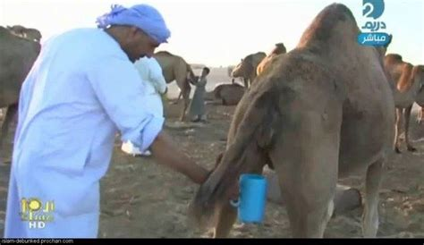 emss  avoid mers  advises   drink camel urine