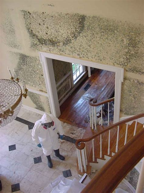 mold removal product brp home corner
