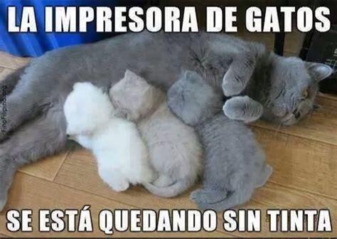 Memes De Gatos - search memes and google on pinterest