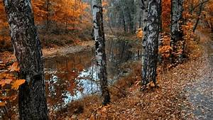 Full HD Wallpaper river birches autumn falling leaves ...
