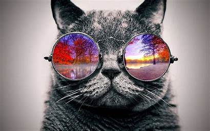 Wallpapers Cat Trippy Cool