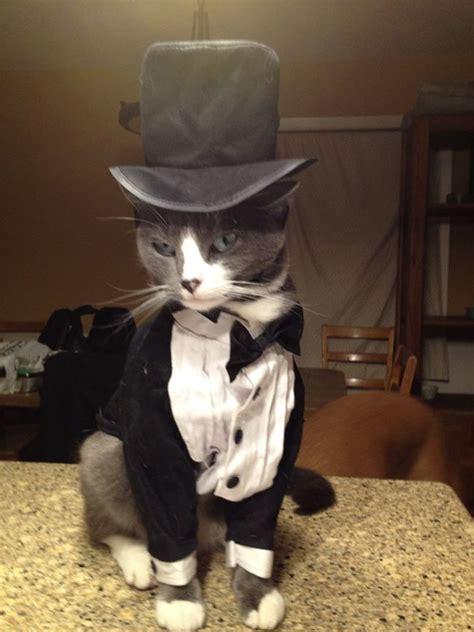 fotos de gatos adorables  sombrero