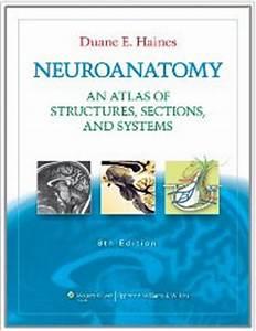 Photos: Neuroanatomy Books Free Download, - HUMAN ANATOMY ...