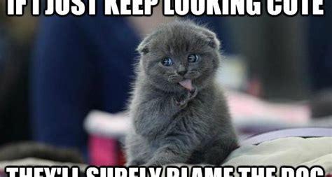 Morning Cat Meme Morning Cat Meme Facts