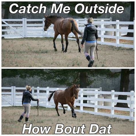 Horse Riding Meme - 1000 ideas about funny horses on pinterest horse humor funny horse quotes and horses