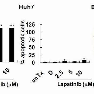 Induction of non-apoptotic cell death by lapatinib in HCC ...