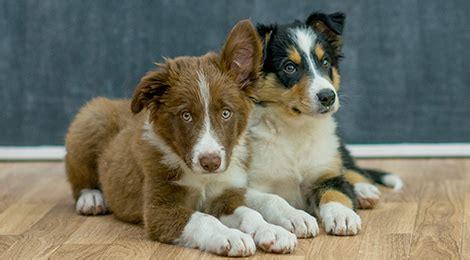 Bestes Hundefutter Für Welpen