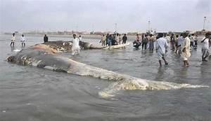 World's Biggest Shark ~ Damn Interesting Things