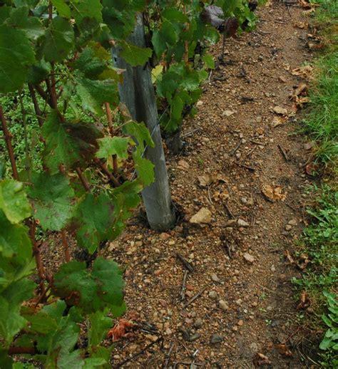 chambre agriculture loire les appellations auvergne loire régions vins