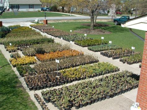 Backyard Business Ideas - starting a plant nursery