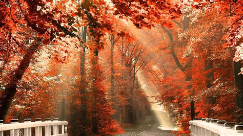 Fall Esthetic Backgrounds by Vintagevelvets Happy Autumn 2013 22 Stunning