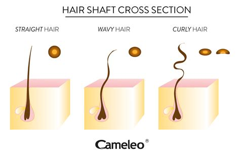 curly hair problems and care cameleo on your hair