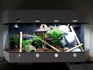 Terrarium Steine Kaufen : terrarium im asia stil in t nisvorst reptilien ~ Michelbontemps.com Haus und Dekorationen