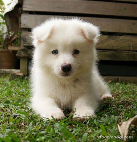 25 best ideas about hypoallergenic puppies on pinterest