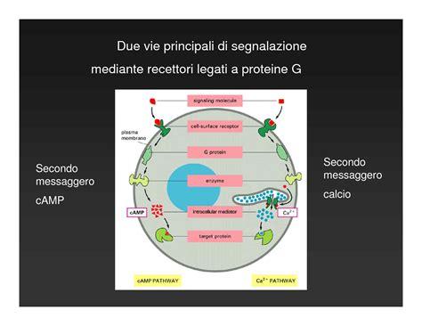 dispense di biologia sistemi di adesione tra cellule dispense