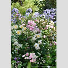Best 25+ Pastel Flowers Ideas On Pinterest  Cute Pastel