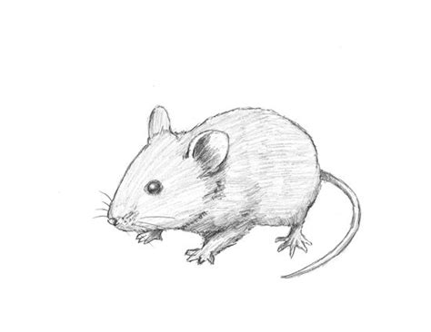 draw  mouse tutorial    animals