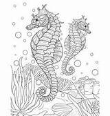 Seahorse Coloring Adult Pages Vector Bookpage Vectors sketch template