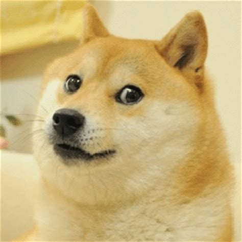 Know Your Meme Doge - image 588854 doge know your meme