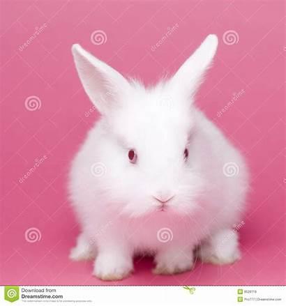 Rabbit Leuk Babykonijn Wit Coniglio Bambino Sveglio