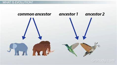 Types Of Evolution Worksheet Nidecmege