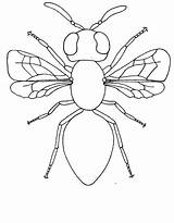 Insect Colouring Insects Coloring Bug Inspire Ed sketch template