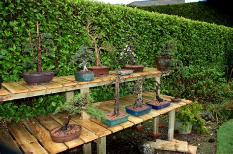 Bonsai Display Benches Futterwithtrees