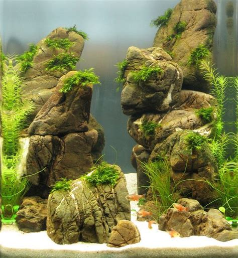 how to aquascape a freshwater aquarium 17 best images about aquascaping on shallow