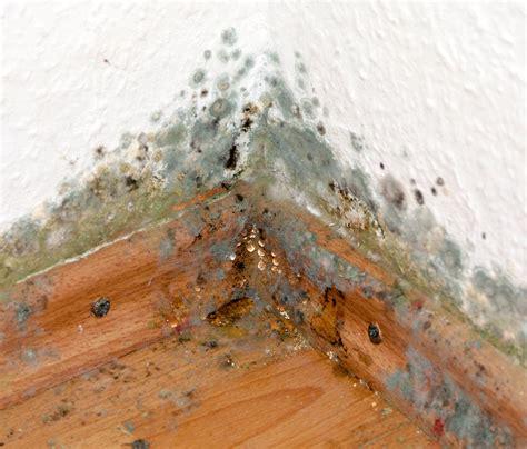 Feuchte Wand Schimmel by Schimmel An Der Wand Was Tun Hsb Haus