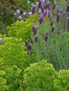 Hochwachsende Stauden Winterhart : geranium cranesbill storchschnabel blumenrabatte ~ Michelbontemps.com Haus und Dekorationen