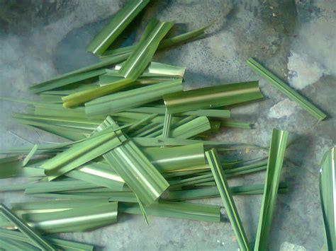 gambar bentuk tulang daun tumbuhan hijau juragan les