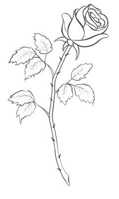 Rose Drawing Outline | ΛΟΥΛΟΥΔΙΑ | Pinterest | Rose