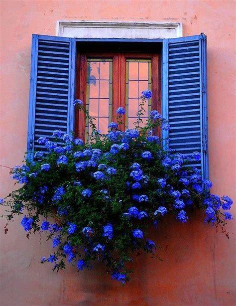 Blumenkästen Für Den Balkon by Blumenkasten F 252 R Den Balkon Blaue Blumen Blaue