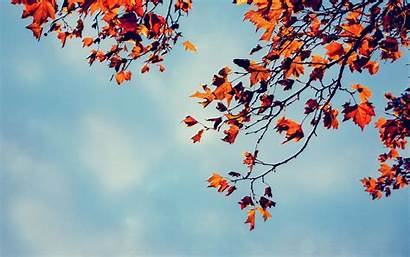 Nature Wallpapers Maple Leaves Autumn Sky Week