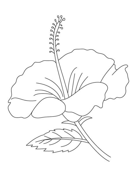 Hibiscus Flower Coloring Page : Color Luna
