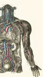 Anatomy Wallpapers (66 Wallpapers) – HD Wallpapers