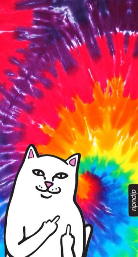 Aesthetic Cat Wallpaper Iphone by Wallpaper Middle Finger Cat Aesthetics Covers