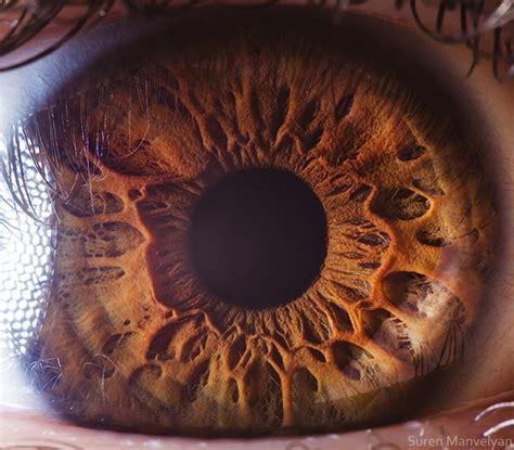 stunning macro photography shows  beauty   human eye