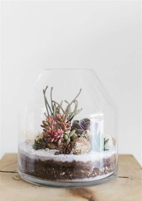 care   succulent terrarium martha