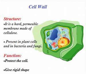 Plant Cell | Animal Cell | Structure and Functions Of ...