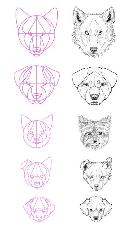 dog drawing art animals wolf draw animal anatomy wolves
