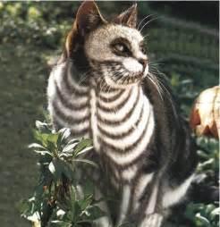 skeleton cat skeletons images skeleton cat wallpaper and background