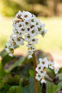 Weiße Dekosteine Garten : durch schattenpflanzen den garten versch nern ~ Sanjose-hotels-ca.com Haus und Dekorationen