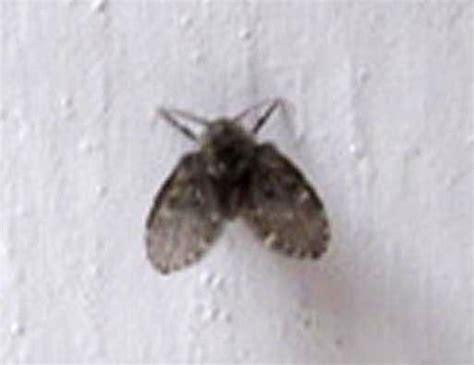 bathroom flies archives whats  bug
