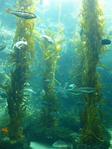 Kelp Forest | Nature | Pinterest