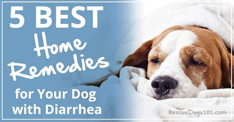 home remedies   dog  diarrhea rescue