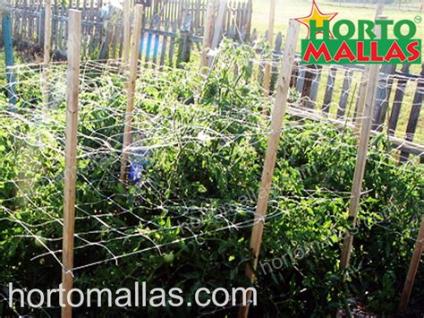 Trellis Netting by Install Trellis Netting For A Transformed And