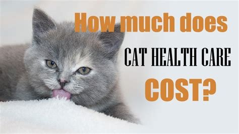 How Much Does Cat Health Care Cost?